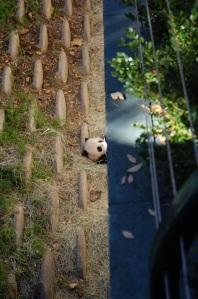 SD Baby Panda Chilling