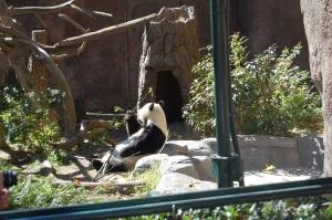 SD Panda Munching