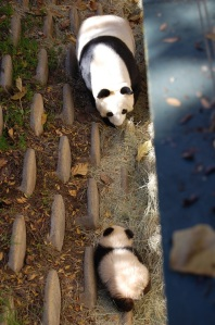 SD Panda Retrieval