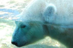 SD Polar Bear Shaming