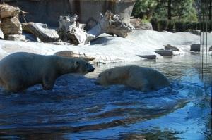 SD Polar Bear Timeout