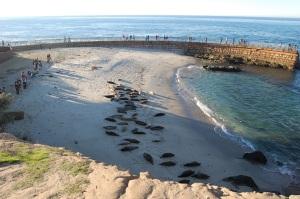 Seals Overhead