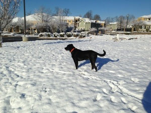 Harper Body Snow