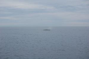 H&M First Whale