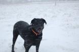 Snow Harper Pose