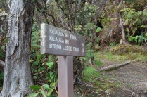 Kilauea Iki trail head