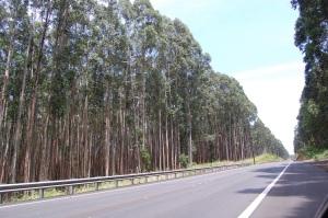 HI 05 - Trees